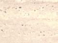 D5800 NIAGARA SQ.jpg